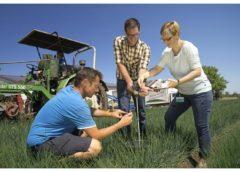 Detektion von Nitratkonzentrationen in Bodenproben